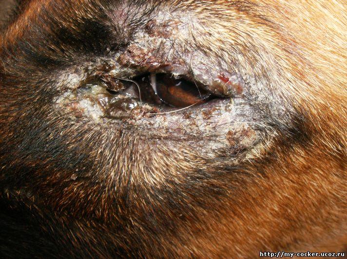 кожные паразиты у человека симптомы и лечение